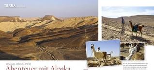 Alpaka-Abenteuer in Israel
