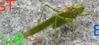 Naturschutzbund Aktion Insektensommer