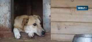 Die Stadt der Hunde: Besuch im größten Tierheim der Welt in Rumänien