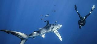Unter Haien