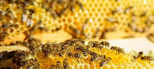 Der Herr der Honigsammlerinnen - move36