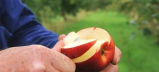 Ernährung: So isst man gesund, ohne dem Klima zu schaden
