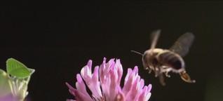 """Die """"Bienenkiller"""""""