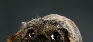 Die Psychologie des Hundeblicks
