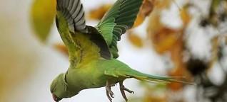Entflogene Vögel einfangen