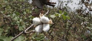 Baumwollprodukte unter der Lupe: Glyphosat durch alle Körperöffnungen