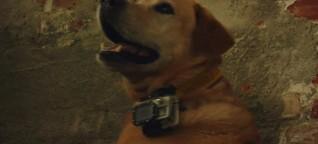 Rettungshundestaffel: Wie Hunde verschüttete Menschen aufspüren