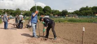 Projekt Interkulturelle Gärten bringt Menschen verschiedener Herkunft zusammen