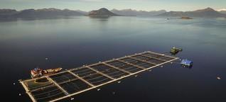 Lachszucht in Chile belastet Umwelt und Fischer