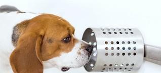 Hunde erschnüffeln Krebs - mit erstaunlicher Trefferquote