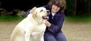 Tierisches Übergewicht: Hund und Katze werden immer dicker