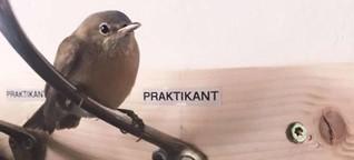 Tierischer Praktikant: Kleiner Vogel besucht die Polizei Frankfurt