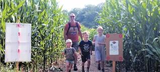 Gut Wulfshagen: Maislabyrinth: Verschlungene Pfade durch den Mais