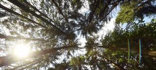 Deutschland sucht den Superbaum