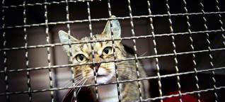 Viele Tierheime in Bayern arbeiten am Limit