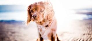 Unbekannte Hundekrankheit in Norwegen ausgebrochen - Behörde warnt vor Kontakt zwischen Tieren