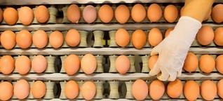 Zahl der Lebensmittel-Rückrufe ist um 50 Prozent gestiegen