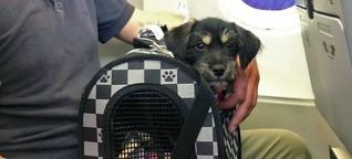 Emotional Support Pets dürfen überall mit hin