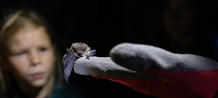 Nacht der Fledermaus