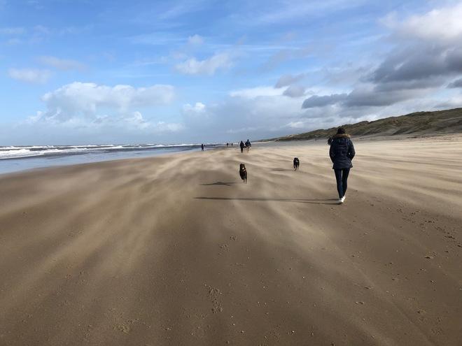 Energiewende Niederlande - der schwierige Einstieg in den Ausstieg