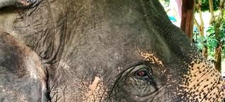 Solltest du in Thailand Elefanten besuchen?