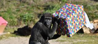 Coronavirus legt Zoos lahm - Affen spüren Veränderung stark
