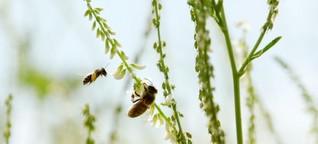 Artenvielfalt und Landwirtschaft : Umweltfreundliche Energiepflanzen / gut zu wissen, BR Fernsehen