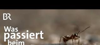 Ökologie und Artenschutz: Wie weit ist Bayern wirklich? | UNKRAUT | BR