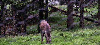 Im Urwald von morgen: 50 Jahre Nationalpark Bayerischer Wald