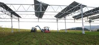 Oben Solar, unten Sellerie - DER SPIEGEL - Wissenschaft