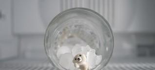 Eisbärennachwuchs im Tierpark Friedrichsfelde | Berlins kleine Tierwelt präsentiert von FluxFM