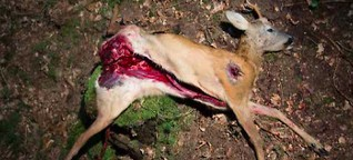 Böses Bambi