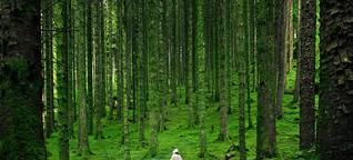 Waldbaden: Die Natur lenkt von Beschwerden und Schmerzen ab