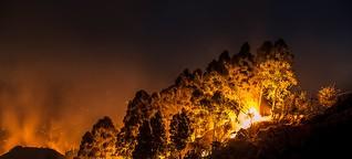 Waldbrände in Kalifornien: Leben im Grünen, ein Spiel mit dem Feuer