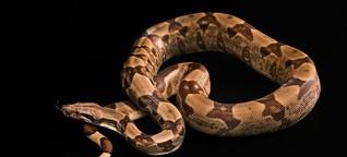 """Verdächtiger im Fall """"NSU 2.0"""": Der Schlangenzüchter"""