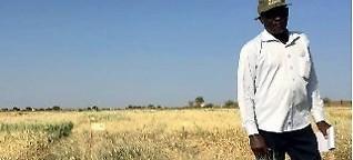 Hartweizen für die Sonne Afrikas