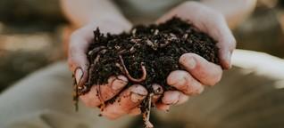 Warum du über Würmer als Haustiere nachdenken solltest