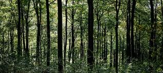 Podcast Synapsen: Lasst den Wald in Ruhe!