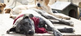 Pathologisches Horten: Eine Tierliebe, die Tiere leiden lässt
