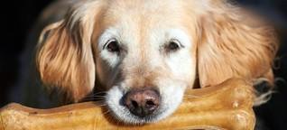 Corona-Studie: Menschen können Hunde und Katzen anstecken