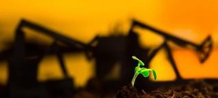 Versprechen der Bioökonomie - Das Gleiche in Grün?