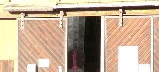 Flohmarktkaufhaus Kaupuskoipi