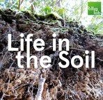 Life in the Soil Podcast