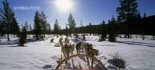 Wegen Corona: Schlittenhunde in Norwegen müssen sterben