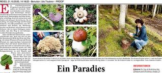 Pilzseminar im Schwarzwald