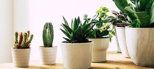 Umweltschutz im Blumentopf: So nachhaltig sind Zimmerpflanzen