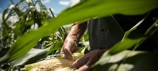 Warum Mais eine biologische Alternative für Holzkohle ist
