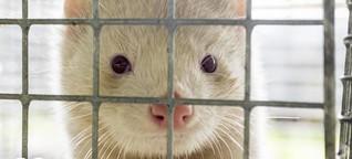 Mit Massentötungen gegen Tierseuchen