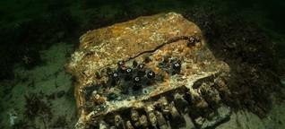 Sechs Enigmas aus der Ostsee geborgen: was Archäologen sagen