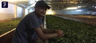 Darjeeling : Ein Sturz erweckte den Tee-Magier